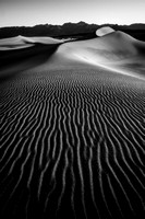 Mesquite Sand Dunes Black and White #1