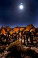 Full Moon over Yucca Trees, Red Rock Canyon, CA