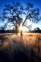 Oak Tree at Sunrise Mariposa County