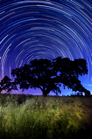 Henry Coe Star Trails #1