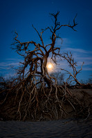 Full Moon rising through the trees, Death Valley